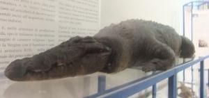 museo diocesano coccodrillo